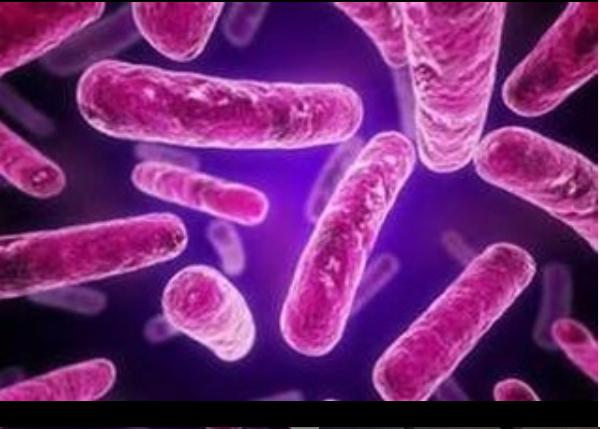 gut brain microbiome